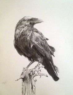 Choose your favorite crow drawings from millions of available designs. All crow drawings ship within 48 hours and include a money-back guarantee. Crows Drawing, Bird Drawings, Animal Drawings, Crow Art, Bird Art, Rabe Tattoo, Crow Painting, Natur Tattoos, Bird Sketch