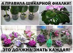 Indoor Flowers, Houseplants, Garden Plants, Vegetables, Violets, Gardening, Google, Garten, House