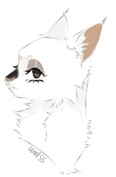 Cat Drawing, Drawing Sketches, Animal Drawings, Cool Drawings, Warrior Cats, Cat Art, Weird, Batman, Superhero