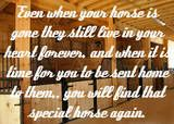 horse quotes photo: Gone but Not Forgotten horse_stalls_medium.jpg