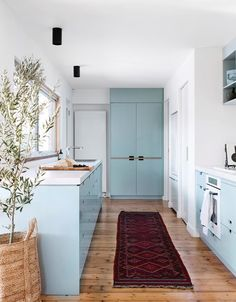 Dulux Blue Balm is the shade that creates a sense of calm in this galley kitchen in an Edwardian Melbourne family home. Kitchen Design, Blue Kitchen Designs, Kitchen Colors, Pine Floors, White Cabinetry, Country Style Kitchen, Blue Kitchens, Georgian Style Homes, Kitchen Cupboards Paint