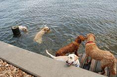 Dog Park Party by loweonthego, via Flickr