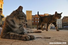 Torre Argentina Cat Sanctuary - Szukaj w Google