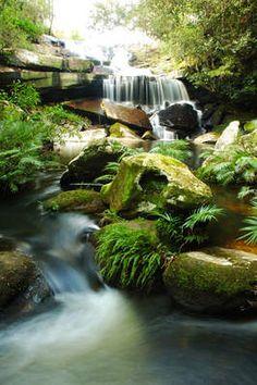 Tuinposter van Waterval / mos