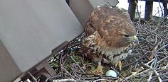 Cornell Lab Bird Cams | Virtual Bird Watching at its Best!