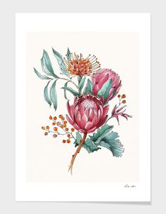 King protea flowers watercolor illustration Stationery Cards by svetache Protea Art, Flor Protea, Protea Flower, Flower Bouquet Drawing, Flower Art Drawing, Art And Illustration, Watercolor Illustration, Floral Illustrations, Botanical Drawings