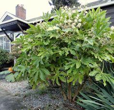 pin von daniela jelen auf garten pinterest pflanzen balkon und bambus pflanzen. Black Bedroom Furniture Sets. Home Design Ideas