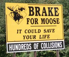 See the Moose - Don't hit the Moose ! Moose Tours are late April - early October.