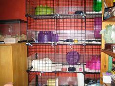 Cage Setup discussions - Hedgehog Central – Hedgehog pet care & owner forum #hedgehog