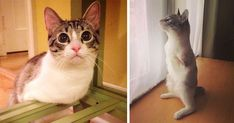 Roux The Adopted Two-Legged Bunny-Cat Is Instagram's Latest Sensation | Bored Panda
