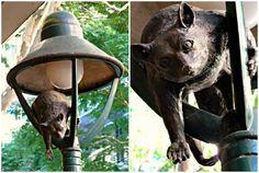 Possum Bronze Street Sculpture in Brisbane