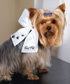 """""""Best Pet"""" Wedding Bow - White with Black Embroidery  Your dog is your best friend, your companion, your """"Best Pet!"""". Show them off at the ceremony with this charming wedding bow, designed to attach to your existing collar. @Kristee Lee"""