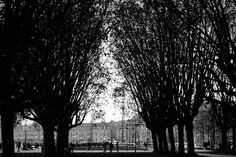 19th of December - Bordeaux  (France) : Trees cathedral on the side to the river. A majestic environment for a walk