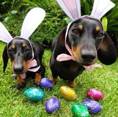 Happy Easter from Lewis & Russell