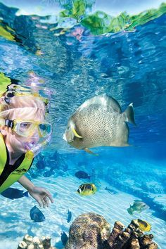 Discovery Cove in Orlando. Want to take the girls here! Funnest time ever!