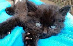 What a beautiful kitten…