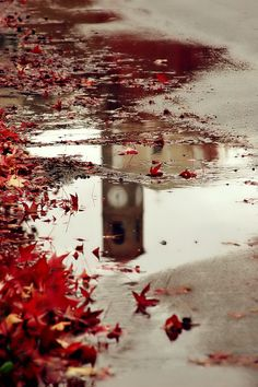 Autumn Rain ✿❁✽Delightful✾✽❃