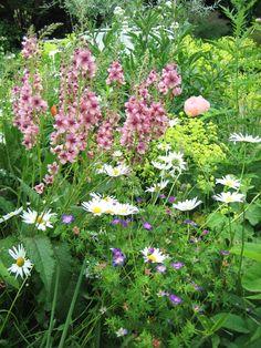 Wiesenhafte Anmut Plants, Garten, Pictures, Flora, Plant, Planting