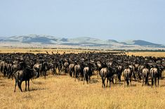 National Park Serengeti Tanzania Africa | Travel Trip: Serengeti National Park Tanzania
