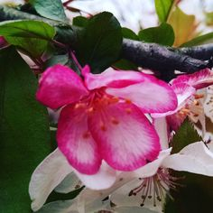 Deanna Waggy (@ot4peace) • Instagram photos and videos, Nature as a #SpiritualPractice