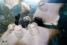 These four sting rays. | Community Post: 25 Animals Who Can't Stop Smiling