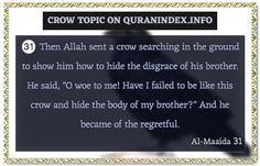 Browse Crow Quran Topic on https://quranindex.info/search/crow #Quran #Islam [5:31]