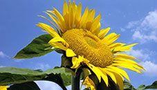 Obras de la comunidad: Flora