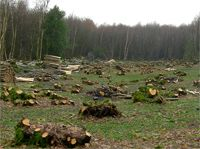 Coppicing: An Introduction