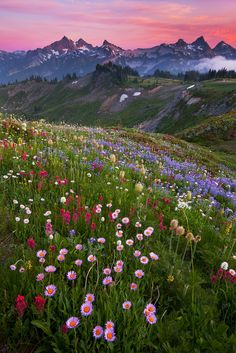 so beautiful - gorgeous mountains and flower field. Where is this amazing place? Nature Aesthetic, Flower Aesthetic, Beautiful World, Beautiful Places, Beautiful Pictures, Beautiful Gorgeous, Absolutely Gorgeous, Simply Beautiful, Landscape Photography