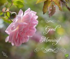 Good Morning ! ~♡~