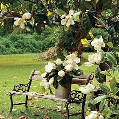 Lovely magnolias, a Southern beauty with a heavenly fragrance...