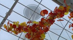 New Chihuly glass exhibit opens May 21!