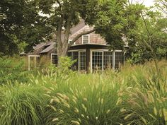 To honor the vernacular of field and forest at this location near East Hampton, Eric Groft of Oehme, van Sweden used generous swaths of grasses like Pennisetum alopecuroides, and low-maintenance perennials such as Rudbeckia nitida 'Herbstsonne'.