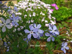Petra Rosso' Garden. Blue & purple flower bed. Spring