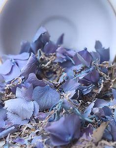 Hydrangea Petal