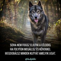 Hungary, Real Life, Reflection, Wolf, Motivation, Quotes, Diy, Crafts, Animals