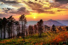 Forrest sunset.