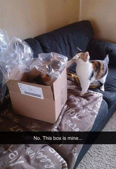 It's my box! No it's mine! I got here first! Can we share? Nope! Get your own box!