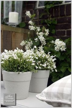 Little Gardens, Small Gardens, Outdoor Gardens, Garden Deco, Terrace Garden, Patio Plants, Garden Planters, Pot Jardin, White Gardens