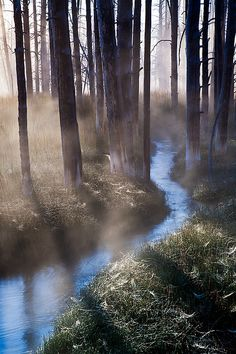 stream in the mist