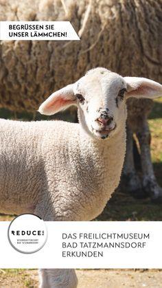 Entdecken Sie ein Stück burgenländische Geschichte mit 21 Bauwerken aus dem 18. - 20. Jahrhundert und besuchen Sie bei einem herrlichen Frühlingsspaziergang unsere kleine Lammfamilie. #Freilichtmuseum #Ausflugsziel #Regionerleben #Burgenland #Frühling Lamb, Animals, Explore, History, Animales, Animaux, Animal, Animais, Baby Sheep