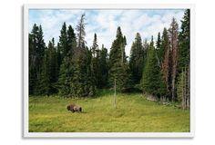 Jesse Chehak, Yellowstone Park, Wyoming
