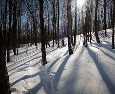 Presque le printemps : sentier du Mont Chauve Crédit photo : MG Guiomar
