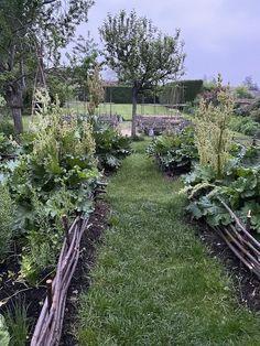 Fenced Vegetable Garden, Vertical Vegetable Gardens, Indoor Vegetable Gardening, Potager Garden, Tomato Garden, Vegetable Garden Design, Garden Fencing, Tomato Plants, Container Gardening