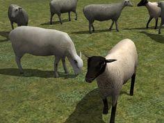 Kinematisch animierte Schafe ab EEP 9.1