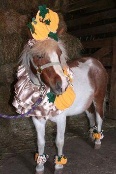 Pumpkin - The Horse Tailor