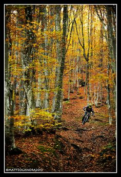 Autumn in the woods, although leaves can be pretty sketchy to ride on sometimes...