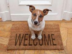 Aqueles que adotam um novo cãozinho pensando precisar apenas alimentá-los e dar banho podem ter gran... - Foto: Shutterstock