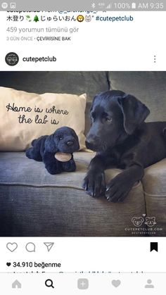 Black Labrador Retrievers - Tap the pin for the most adorable pawtastic fur baby apparel! You'll love the dog clothes and cat clothes! <3