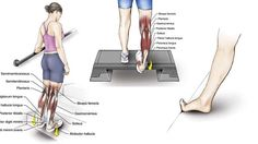 6 Exercises to Stretch Your Toes, Ankles, Soleus and Gastrocnemius Muscles - The Health Science Journal Ankle Exercises, Calf Stretches, Muscle Stretches, Stretching Exercises, Stretch Calf Muscles, Peroneus Longus, Gastrocnemius Muscle, Hamstring Muscles, Physical Therapy